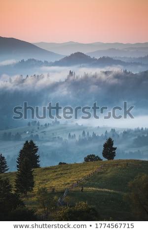 misty · prato · all'alba · panorama · primavera · erba - foto d'archivio © juhku