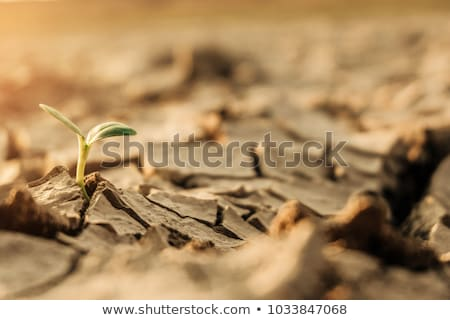 Dry Leaf on cracked ground Stock photo © ankarb