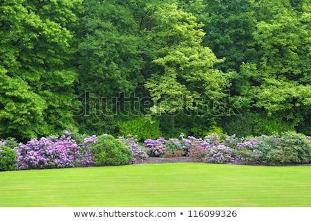 Colonial Garden Stock photo © Pegasi8Imagery
