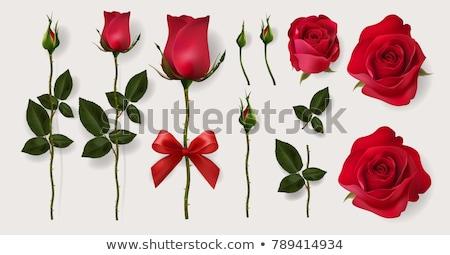 isolated beautiful red rose heart eps 10 stock photo © beholdereye