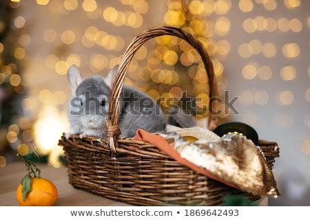 Chinchilla panier bébé séance isolé blanche Photo stock © svetography