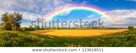 rural panorama landscape with rainbow Stock photo © meinzahn