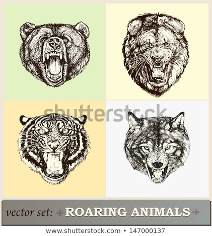 Medve illusztráció heraldika tetoválás terv izolált Stock fotó © Genestro