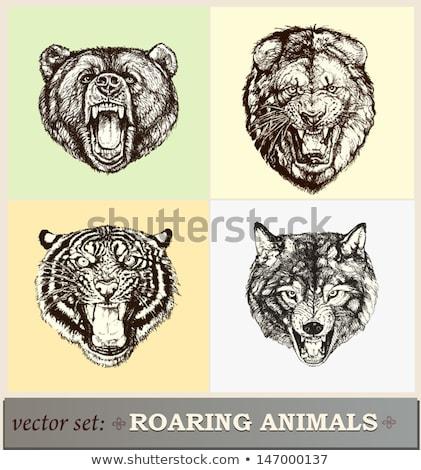 Roaring Heraldic Bear Stock photo © Genestro