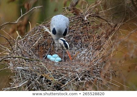 four gray eggs in bird nest stock photo © bluering