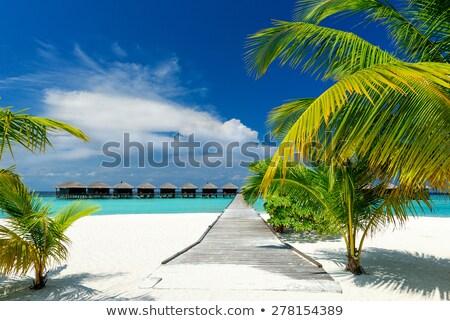 Természet jelenet bungaló tengerpart illusztráció tájkép Stock fotó © bluering