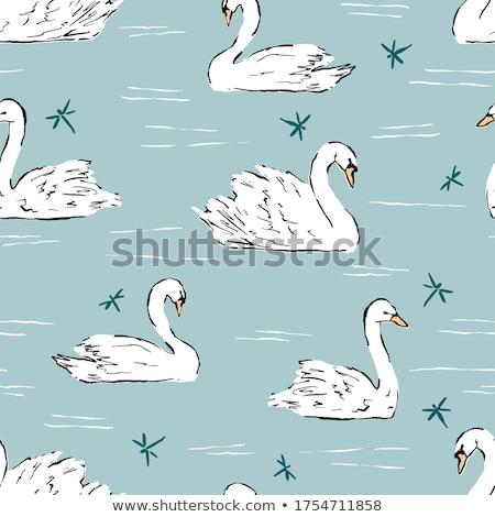 лебедя озеро весны время воды пейзаж Сток-фото © mady70