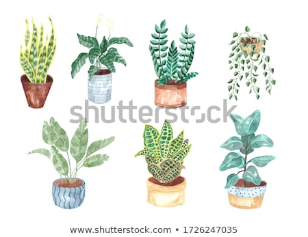 Green houseplant in a white pot  stock photo © d_duda