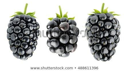 BlackBerry изолированный белый лист фрукты фон Сток-фото © M-studio