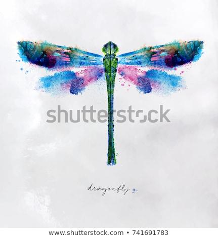 feliz · desenho · animado · libélula · ilustração · olhando - foto stock © bluering