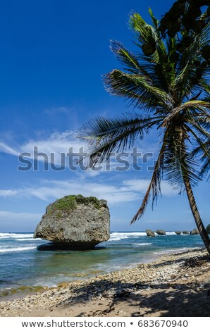 Bathsheba coral reef boulder stock photo © smartin69