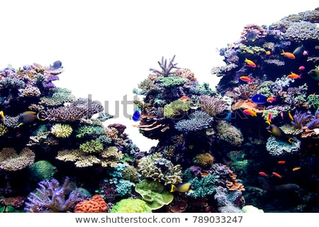 Korallzátony fehér illusztráció természet háttér művészet Stock fotó © bluering