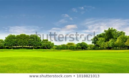 verde · paisaje · carretera · árboles · nubes · árbol - foto stock © wad