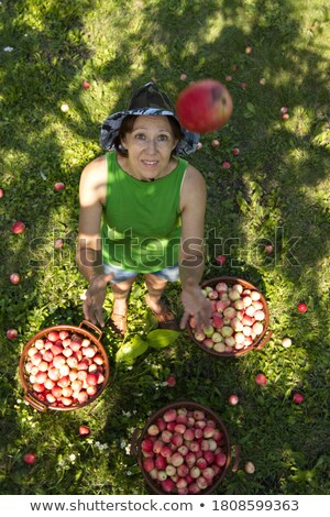 Woman catching apple in orchard. Stock photo © IS2