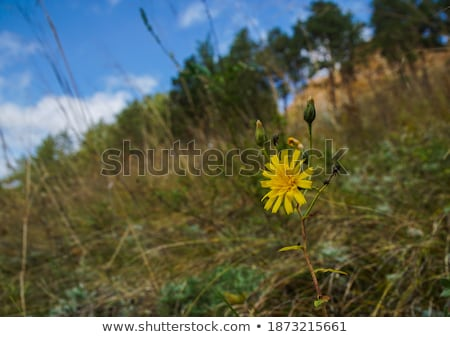 stony post on summer mountain ridge stock photo © wildman