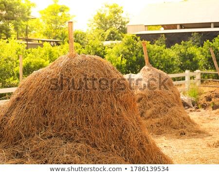 Boglya száraz széna hegy legelő vidéki táj Stock fotó © Kotenko