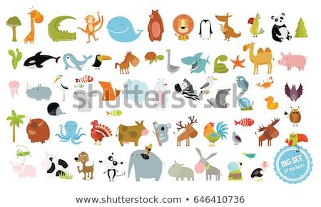 kangaroo cartoon animal character stock photo © izakowski