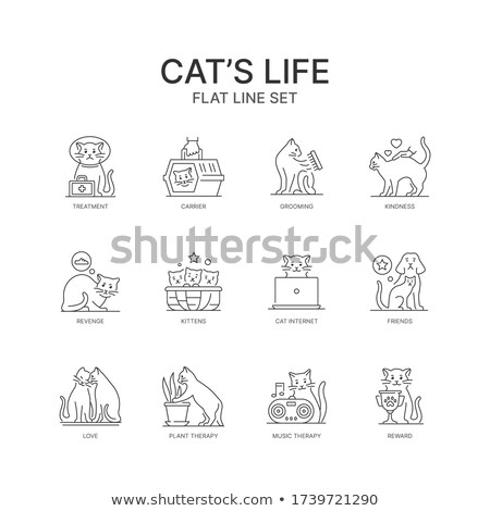 Cats playing in cage Stock photo © colematt