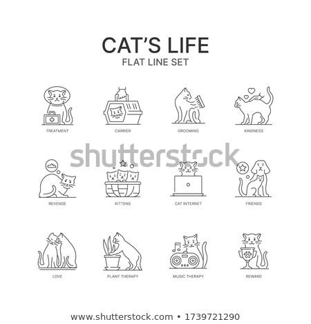 кошек играет клетке иллюстрация природы фон Сток-фото © colematt