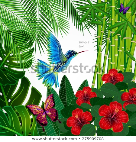 Vettore bambù frame tropicali fiori isolato Foto d'archivio © dashadima