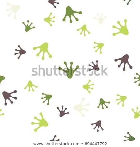 Illustration Green Frog on Green Background Stock photo © brux