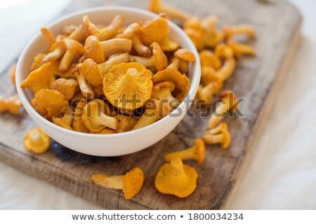 Amarelo cogumelo gradiente isolado jardim Foto stock © cidepix