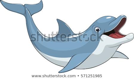 bonitinho · golfinho · desenho · animado · marinha · ilustração - foto stock © cidepix