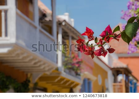 Virág virágzik színes utca Colombia közelkép Stock fotó © boggy