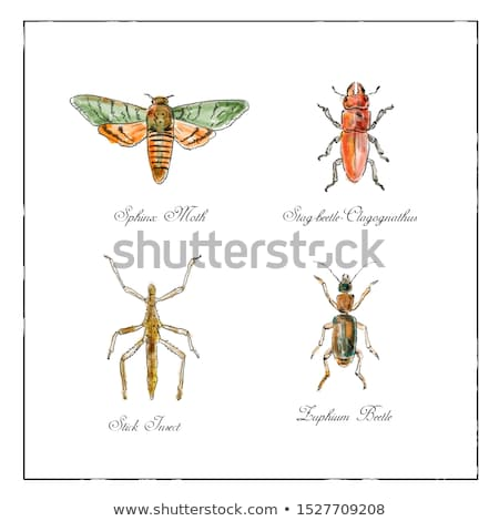 Sphinx Moth, Stag beetle, Stick Insect and Zuphium Beetle Vintage Collection Stock photo © patrimonio