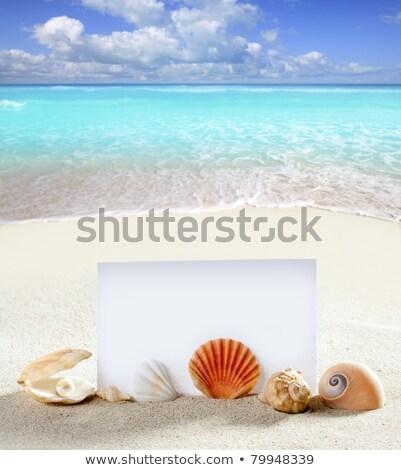 beach vacation sand pearl shells snail blank paper Stock photo © lunamarina