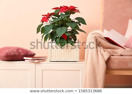 Güzel kırmızı bitki simge Noel yaprak Stok fotoğraf © wildman