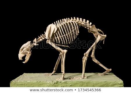 Foto stock: Real · animal · tenha · foto · preto · abstrato