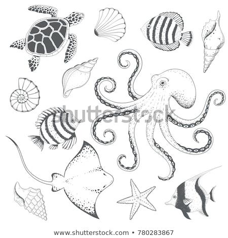 turtle octopus and starfish stock photo © dayzeren