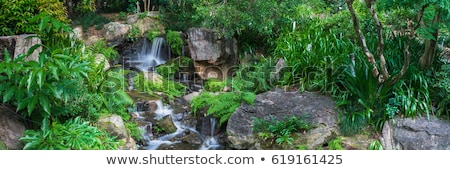 tree fern and waterfall in tropical rain forest paradise Stock photo © kikkerdirk