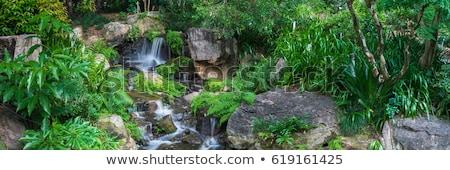 ツリー · シダ · 滝 · 熱帯 · 雨林 · 楽園 - ストックフォト © kikkerdirk