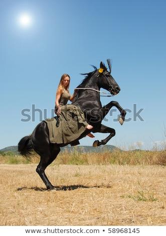 semental · negro · hombre · deporte · caballo · campo - foto stock © cynoclub