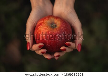 Woman holding a red apple in the palm of her hand Stock photo © photography33