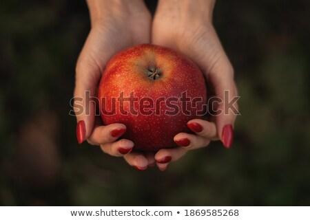 женщину · красное · яблоко · Palm · стороны · продовольствие - Сток-фото © photography33