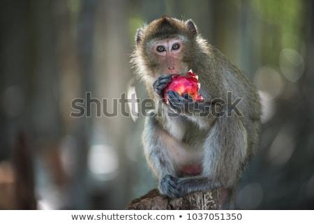 猿 · 種 · 後ろ · バー · 監禁 · 愛 - ストックフォト © gekaskr