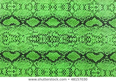 крокодила · кожа · пояса · бумажник · белый - Сток-фото © homydesign