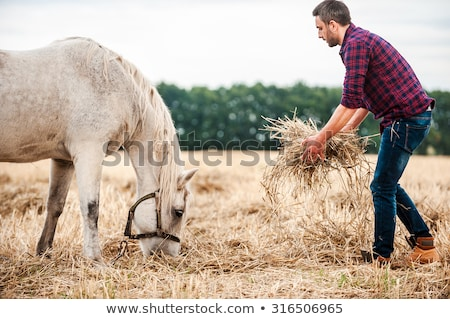 young man taking care of his horse stock photo © photography33