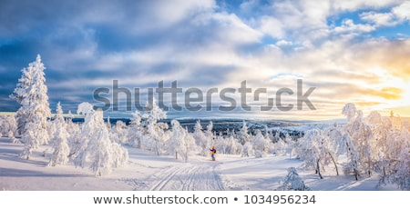young man cross-country skiing on a snowy forest trail  Stock photo © lightpoet