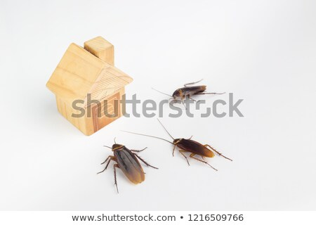 Cockroach Invasion - Bug's View Stock photo © AlienCat