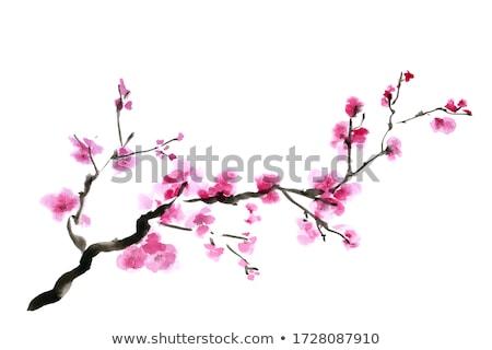 Sakura çiçek stüdyo yıldırım parlak dizayn Stok fotoğraf © snyfer