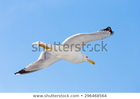 Stock photo: white seagull flying blue sky from below
