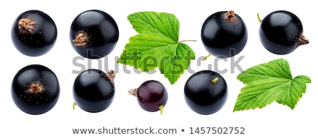 fresh ripe blackcurrant isolated stock photo © len44ik