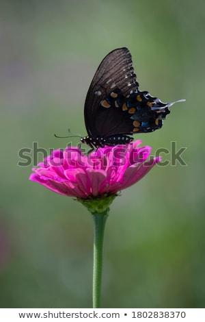 Vlinder nectar bloem vergadering bos blad Stockfoto © stockyimages