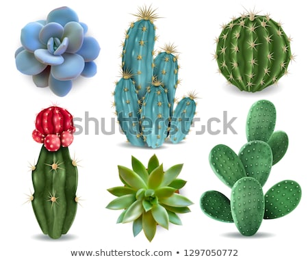 red Cactus plant Stock photo © stocker