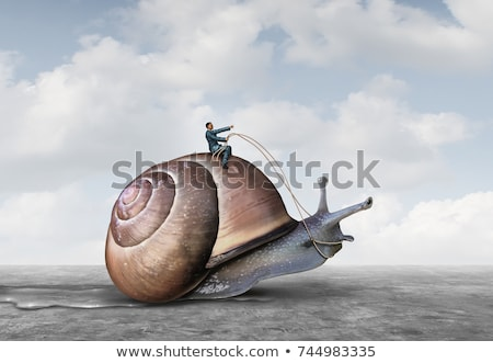 Slow snail Stock photo © anbuch