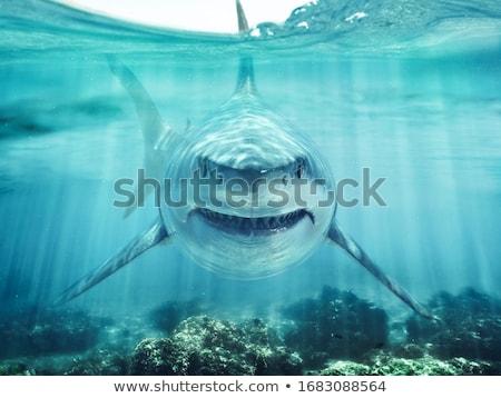 Gevaar haai cartoon geïsoleerd witte water Stockfoto © anbuch